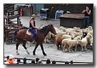 台灣的美麗淨土-清境農場的青青草原及羊咩咩脫衣秀