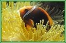 探索美麗繽紛的海底世界-屏東國立海洋生物博物館 National Museum of Marine Biology and Aquarium